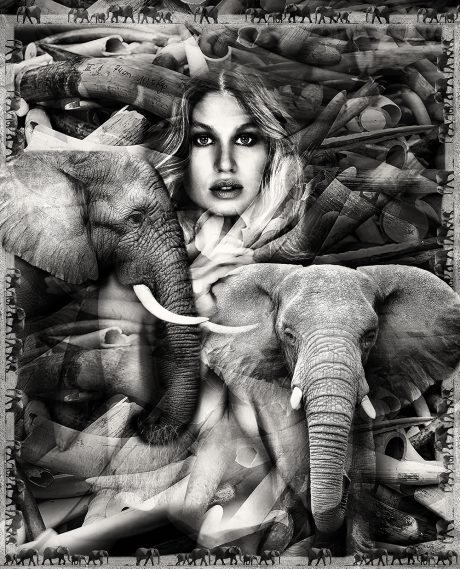 ELEPHANTS / 80X100CM OR 31,5X39,4'' / 110X136 CM OR 43,3X53,5'' / 135/167CM OR 53,1X65,75''